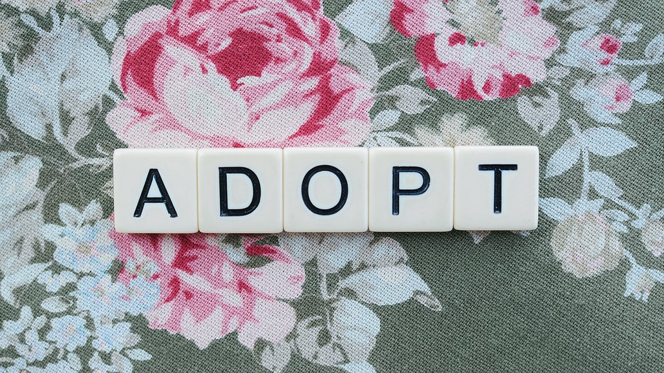 adopt-5339743_960_720