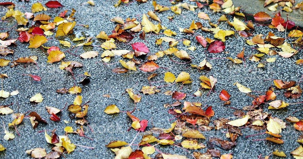 Fall wet leaves on sidewalk